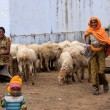 Stock Photo: Northern Indiroad - February 2011 - Group of happy smiling women and children with their sheep.