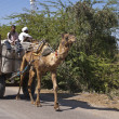 Foto Stock: Rajasthin Indi- February 2011 - Camel pulls wagon with big bag of stuff under guidance of driver with passenger.
