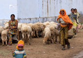 Northern India road - February 2011 - Group of happy smiling women and children with their sheep. — Stockfoto