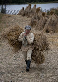 Russia Kizhi - 30 August 2010 - Manual harvesting of wheat on small farm in Northern Russia. — Stock fotografie