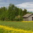 Rural scene with slanted grey barn in Finnish Lapland. — Stock Photo #35797191