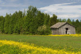 Rural scene with slanted grey barn in Finnish Lapland. — Stock Photo