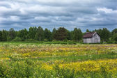 Wildflowers and a lost barn in southern Finnish Lapland. — Stock Photo