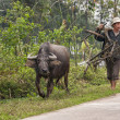Rural scene featuring farmer and buffalo walking along road. — Stock Photo #38882297