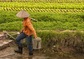 Female farmer holding two full watercans on bamboo shoulder hold — Foto Stock