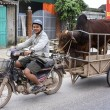 Stock Photo: Merchant on motorcycle brings his bull to cow for procreatio