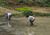 Manually leveling mud in rice paddy with help of a boom. — Stock Photo