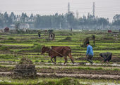 Wide view scenery with farmer and ox plowing rice paddies. — Stock Photo