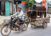 Merchant on motorcycle brings his bull to the cow for procreatio — Stock Photo