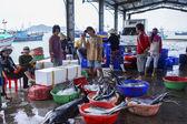 Fishermen and women sorting fish at the harbor. — Stok fotoğraf