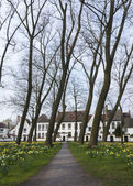 Beguinage of Bruges and daffodils in early spring 2014. — Stock Photo