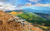 Landscape in the Carpathian Mountains — Stock Photo