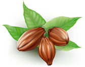 Cacao fruits — Vector de stock