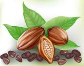 Cacao fruit and grains — Vector de stock