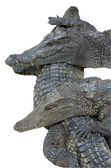 3 coccodrilli abbracciarsi — Foto Stock