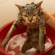 Wet cat kitty in shower — Stock Photo #17594495