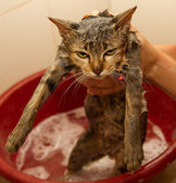 Wet cat kitty in shower — Stock Photo