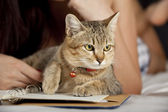 Cat in bed with woman and book — Stock Photo