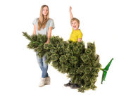 Сhildren carry a Christmas tree — Stok fotoğraf