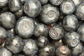 Bilberry-very a useful berry! — Stock Photo