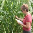 Agronomy expert and corn — Stock Video