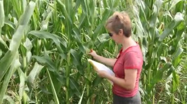 Female agricultural expert inspecting quality of corn in field