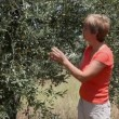 Olive planting — Stock Video #12039947