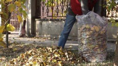 Autumn time — Stock Video