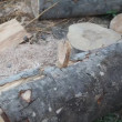 Stock Video: Lumber industry