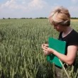 Agronomy expert and wheat — Stockvideo