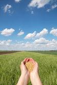 Conceito agrícola — Foto Stock