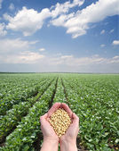 Landwirtschaft — Stockfoto