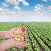 农业 — 图库照片
