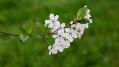 весна — Стоковое видео