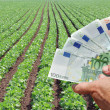 Agricultural concept — Stock Photo