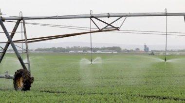 Field watering — Stock Video