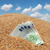Wheat and Euro banknote agricultural concept — ストック写真