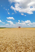 Agriculture, wheat harvest — Stock Photo