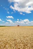 Agricoltura, il raccolto di grano — Foto Stock