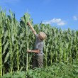 Stock Photo: Agriculture, agronomist at farmland
