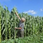 Agriculture, agronomist at farmland — Stock Photo
