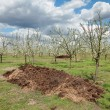 Agriculture, fertilizer in orchard — Stock Photo #40633013