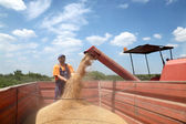 Agriculture, wheat harvesting — Stock Photo