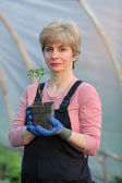 Agricultural worker in a greenhouse with tomato plant — Stock Photo