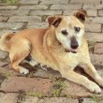 Old sad mix breed dog vintage film look — Stockfoto