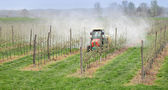 Agriculture, spraying of trees — Stock Photo