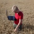 Wheat field inspecting — Stock Video #48987105