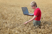 Agriculture, agronomist examine wheat field — Stock Photo