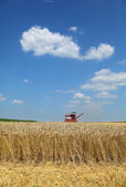 Agriculture, wheat harvest with combine — Stock Photo