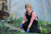 Agriculture, female farmer in greenhouse — Stock Photo